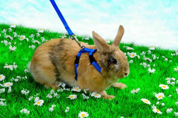 Кролики могут грызть клетку из-за недостатка внимания