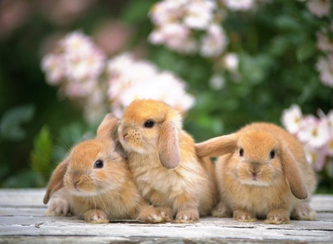 К концу первого месяца у крольчат уже есть волосяной покров