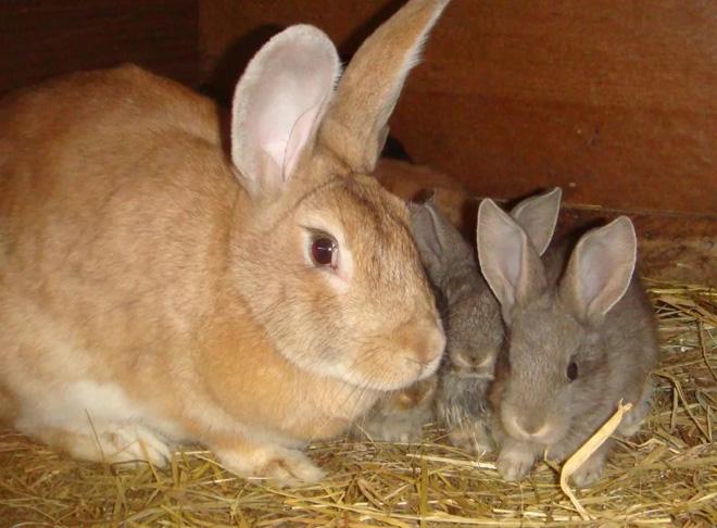 В возрасте 30 дней крольчат уже можно отсаживать от матери
