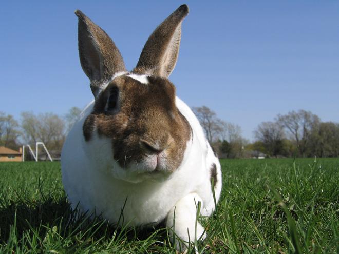 От мокреца кроликов лечат различніми антисептиками