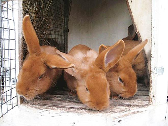 Кролики в хорошей клетке не травмируются