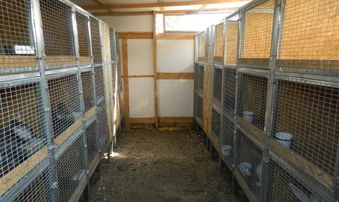 Подходящее помещение для разведения кролей