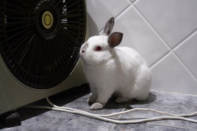 Симпвтичный пушистый кролик стал жителем городской квартиры