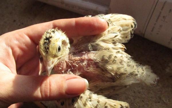 Неблагоприятные условия для птиц