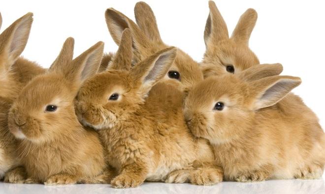Кроликов нельзя держать в тесноте