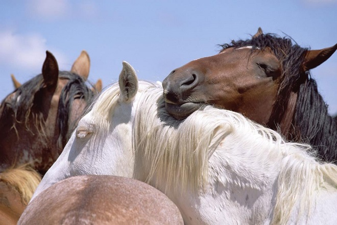 С сородичами лошади спокойно