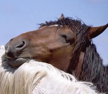 Лошадь сон, Лошади, конь во сне