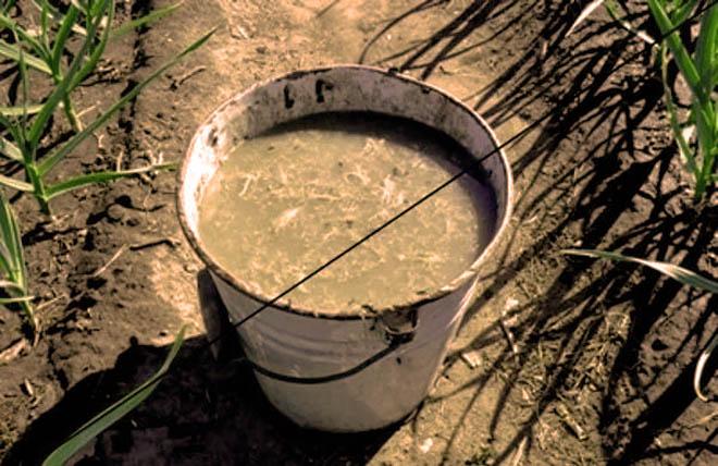 Из кроличьего помета делают биогумус в жидком виде
