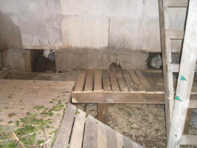 Можно поселить кроликов в специально выкопанную яму