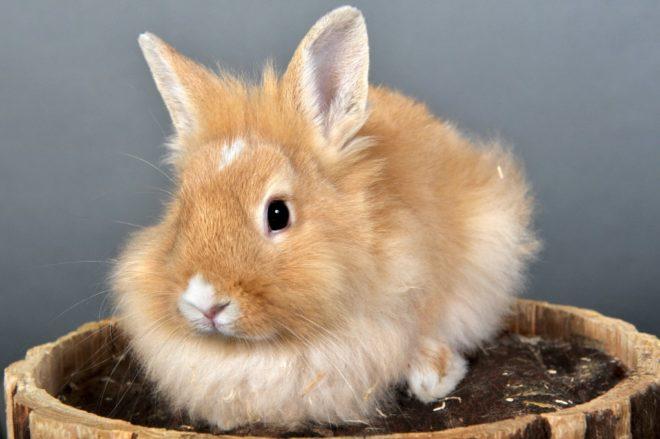 Кролики живут в среднем 8 лет