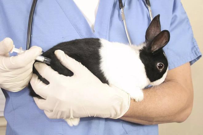 Насморк - признак заболевания кролика