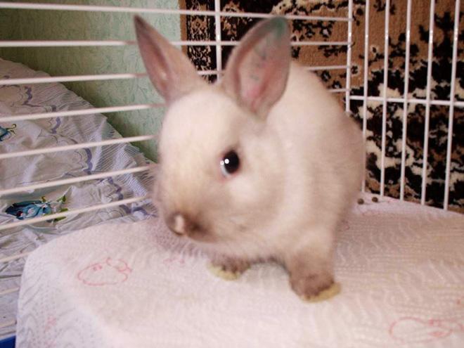 Заболевшего кролика нужно изолировать