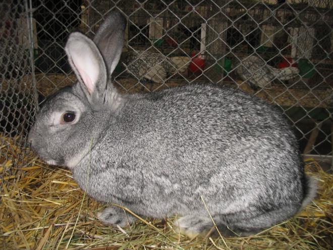 Кролики пугливы
