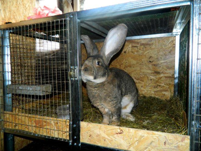 Крольчиха в маточнике - как дома