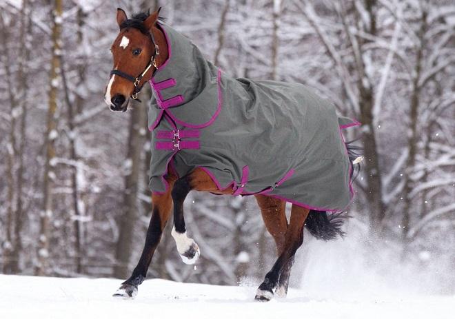 В попоне лошади тепло и сухо