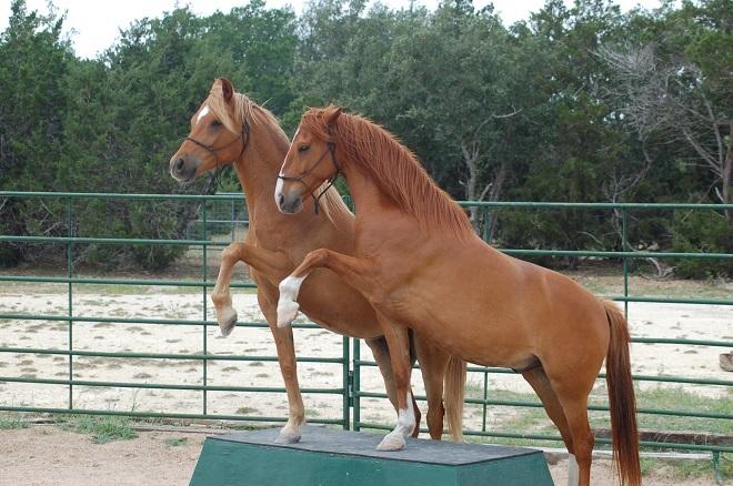 Рыжий конь может быть любой породы