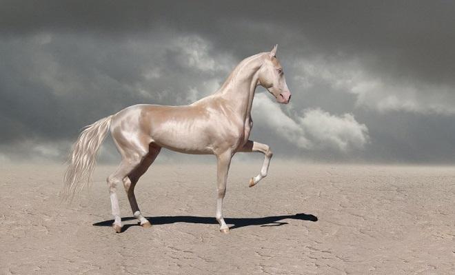 Лошади изабелловой масти - самые красивые в мире