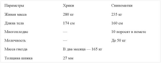 Характеристики свиней крупной черной породы