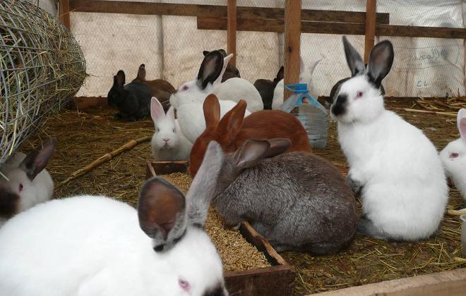 Затраты на откорм животных небольшие