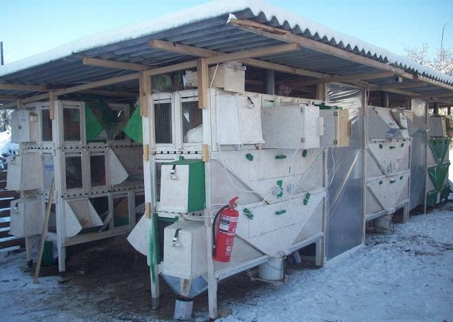Функциональные крольчатники-многоэтажки экономят место на ферме