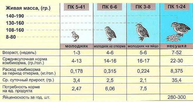 Таблица разведения перепелов