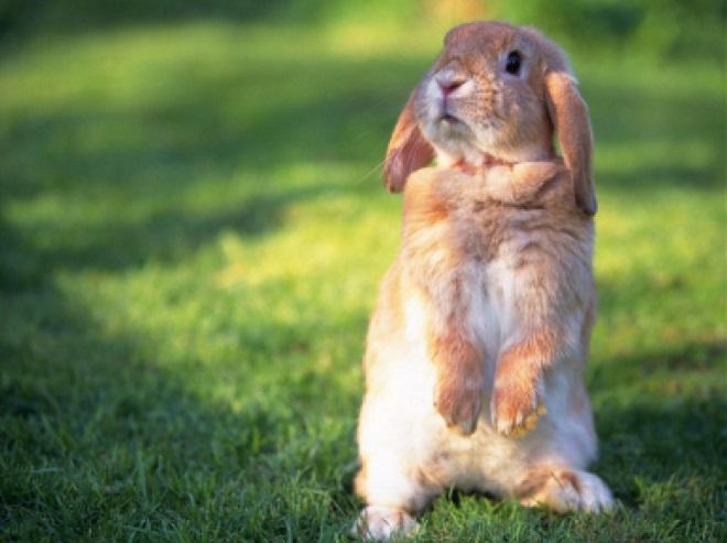 Кролик реагирует на понравившуюся кличку