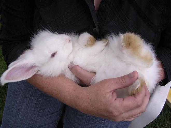 Клички кроликам выбирают и дома, и на фермах