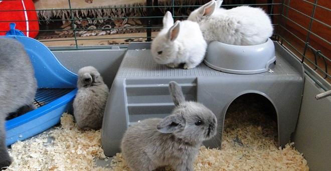 В возрасте нескольких месяцев кролики разных пород похожи