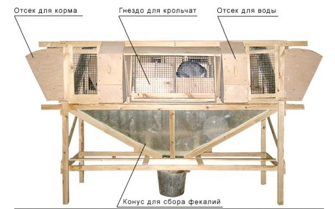 Кролик в клетке Михайлова чувствует себя, как в природной норе