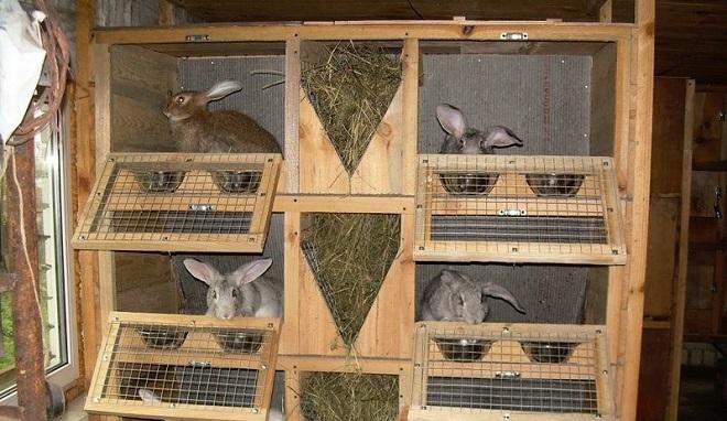 Клетки в крольчатнике бывают разных размеров