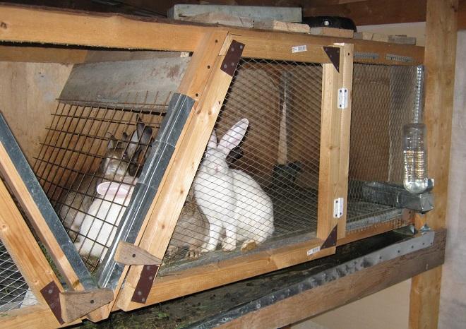Любой крольчатник можно построить самостоятельно