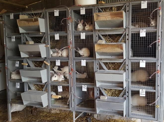Содержание кроликов в белорусских хозяйствах - на высоком уровне