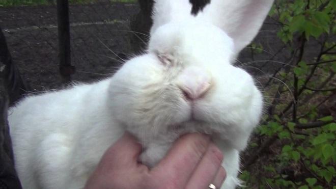 Кролик отказывается от пищи и погибает