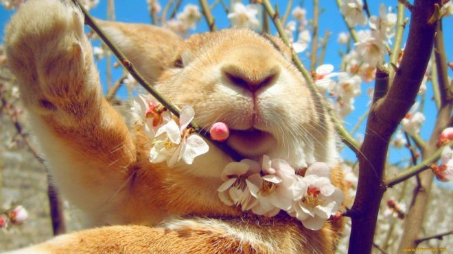 Рацион кроликов обогащают минеральными добавками и витаминами