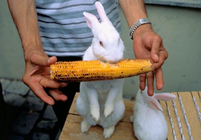 Кролики любят овощи и корнеплоды