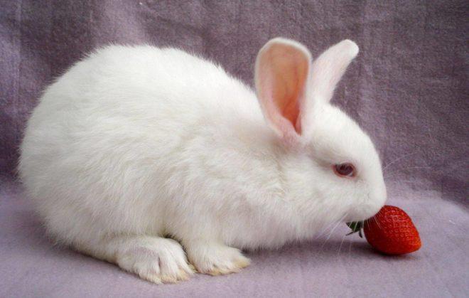 Кролику можно давать немного фруктов и ягод