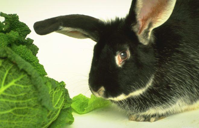 Кролику подходит не каждая трава