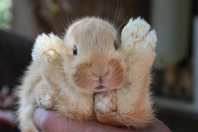 Понос у кролика может закончиться смертью зверька