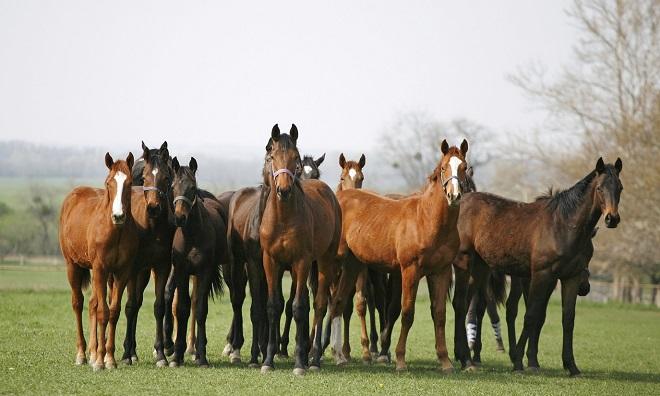 Жизнь на пастбище делает мясо лошади вкуснее
