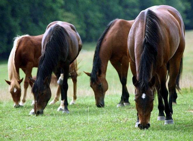 Траву и сено в рационе лошади дополняют витаминами и солью
