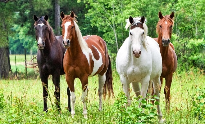 Разведение лошадей может стать прибыльным делом