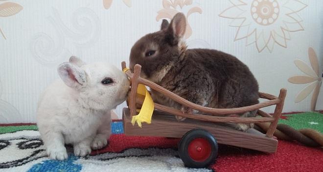 Декоративные плюшевые кролики похожи на игрушки