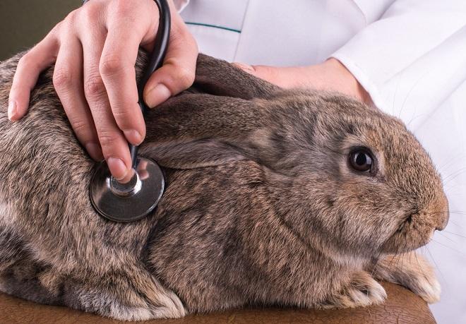 Если придерживаться санитарных норм, кролики будут здоровы