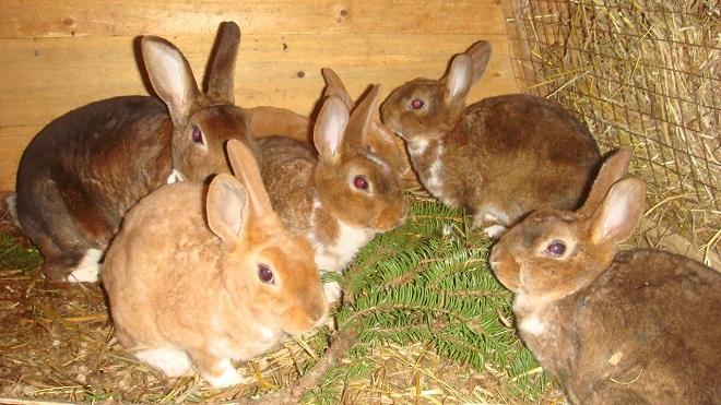 Зимой кроликов подкармливают ветками