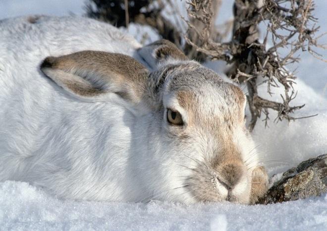 Зимой питомцы могут подхватить простуду или инфекцию