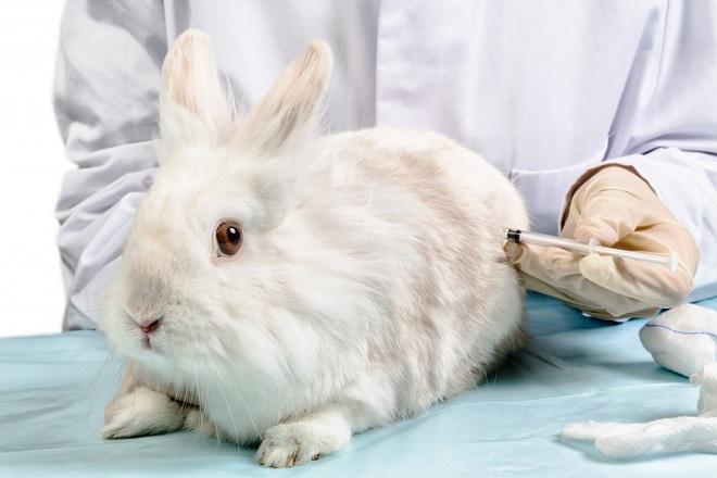 Вовремя сделанная прививка бережет нервы и деньги кроликовода