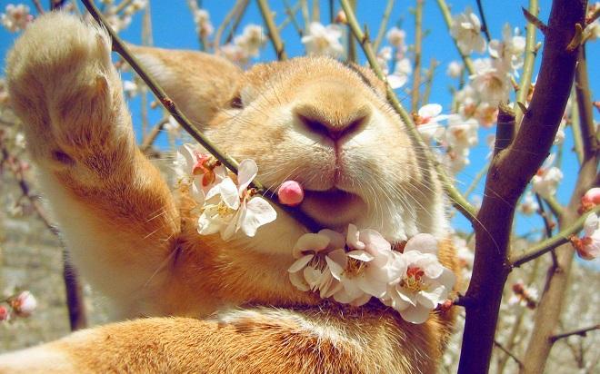 Ветки - важный прикорм для кроликов