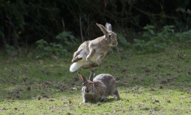 Кролики хорошо бегают и прыгают