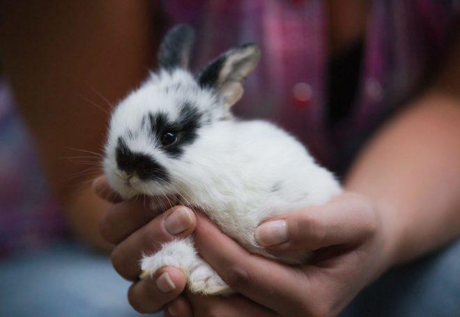 Кролики требуют осторожного обращения