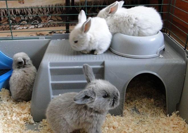Декоративные кролики живут дольше собратьев с ферм